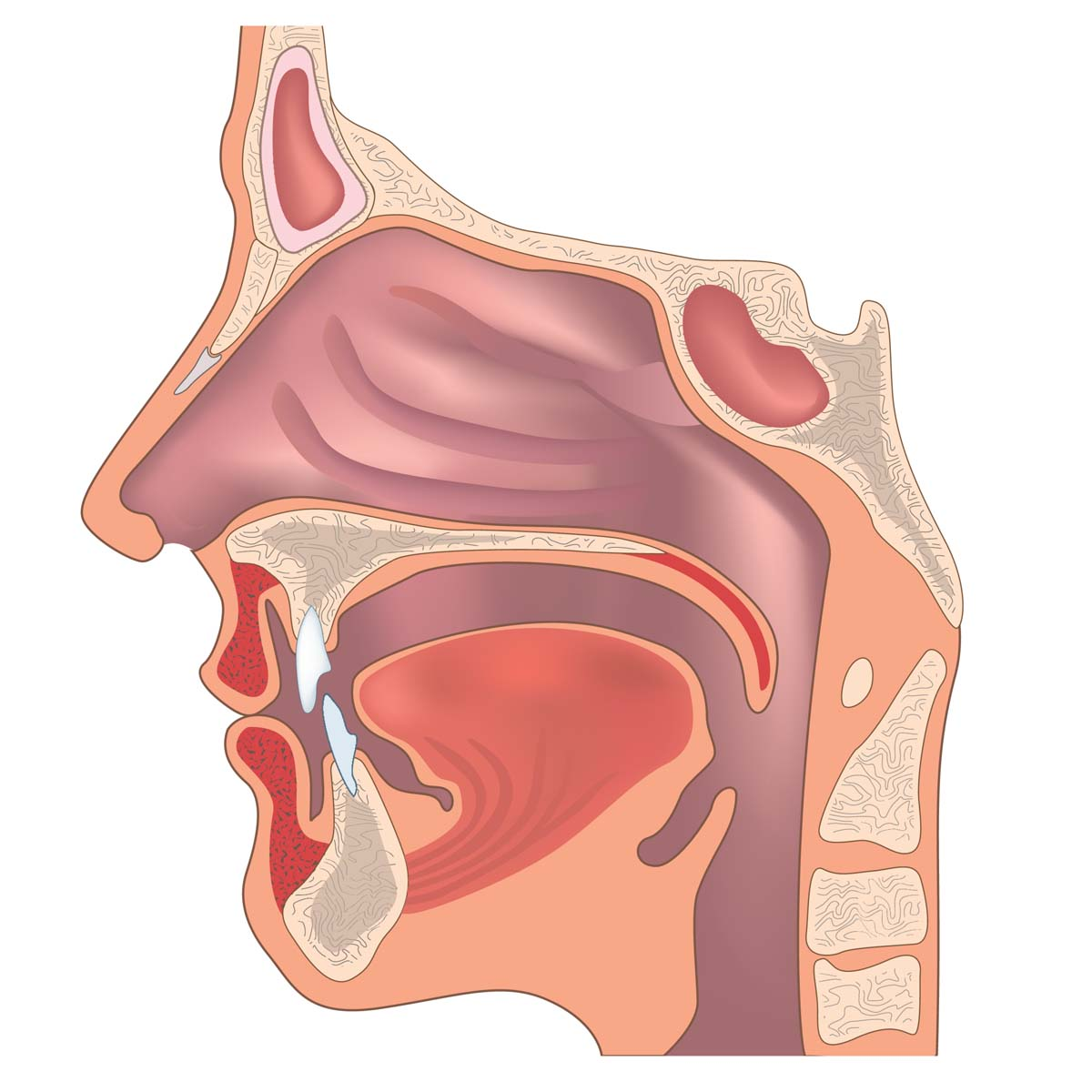 https://ent.uci.edu/learning-center/useful-links/images/Ear_Nose_and_Throat_Doctor_Head_and_Neck_Surgeon_Orange_County_2.jpg